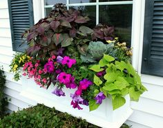 Full sun window box. Love the arrangement. #lowescreator