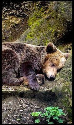 WAITING FOR WINTER  ---- BEAR ---- photo via: Valeria Tsolova -- 500px.com