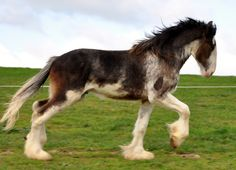 clydsdale horses | www.simplesharebuttons.com Don't be shellfish ...