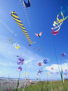 Kites on the Beach, Long Beach, Washington, USA Best Prints Art for Kids by John & Lisa Merrill Long Beach Washington, Washington Usa, Go Fly A Kite, Kite Flying, Kitesurfing, Air Balloon, Balloons, Origami, Beach Posters