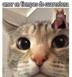 "50 Me gusta, 0 comentarios - Gatos Cool (@gatoscooloficial) en Instagram: "". . . #memesdegatoscool #gatoscool😸 #gatos_cool #cuarentena #quedateencasa #quedsteencasa…"""