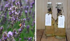 How to: Lavender Syrup - nzgirl Christmas Treats To Make, Handmade Christmas Gifts, Christmas Holidays, Christmas Ideas, Honey Cupcakes, Lavender Syrup, Culinary Lavender, Refreshing Summer Drinks, Food Gifts