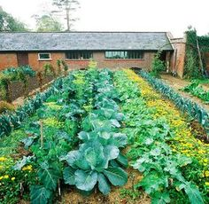 Bio-öko-természethű-ker t-1-rész - gazigazito.hu Gardening For Beginners, Gardening Tips, Organic Vegetables, Vegetable Garden, Organic Gardening, Hydrangea, Homesteading, Backyard, Plants