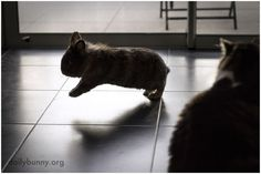 Bunny shows the cat how hopping is done - March 4, 2014