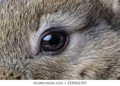 Rabbit Fur, Needle Felting, Art Boards, Sculpture, Eyes, Rabbits, Animals, Image, Crafts