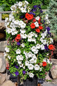You have a small garden but do not know how to decorate. Only with a few steps and re-purposed stuff you can create a beautiful flower tower. These Beautiful DIY Flower Tower Ideas are perfect ways to brighten up your yard. Water Flowers, Flower Petals, Diy Flowers, Flower Tower, Self Watering, Plantar, Geraniums, Houseplants, Container Gardening