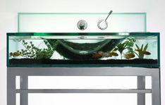 Adding an aquarium to your home sure makes your room beautiful. But more than that studies have shown that observing fish help alleviate stress and reduce blood