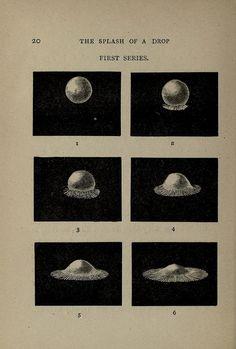 The Splash of a Drop (1895)   The Public Domain Review