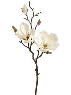 Cream Silk Magnolia Flower Spray Artificial Flower Magnolia Branch in Cream White to perfect any floral arrangement. Two beautiful cream white silk magnolia flowers and buds on a natural looking brown stem can complete your look. Fake Flowers, Artificial Flowers, Silk Flowers, White Flowers, Beautiful Flowers, Cream Flowers, Brown Flowers, Fabric Flowers, Flor Magnolia