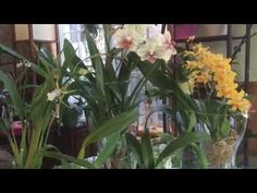 All about Water Culture Orchids - YouTube