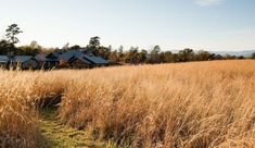 A property in Virginia's Blue Ridge Mountains. Architect Thomas L. Woltz and his team came up with a plan to respect existing natural features of a site. A native meadow with Little Bluestem, Switchgrass, and other pererennials look stunning and cut pathways provide a place to walk, run, and play. Photograph by Eric Piasecki  NBWwsMeadow via Gardenista