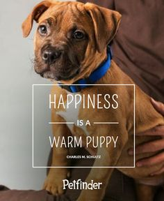 """Pet Quote Petfinder Loves: """"Happiness is a warm puppy."""" -Charles M. Schulz"""