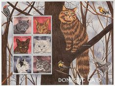 Domestic cats | postage stamps. Sierra Leone