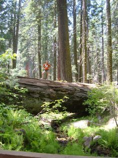 Sequoia and kings Canyon National Park, California