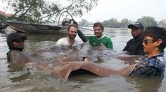 Big stingray fishing mae klong River Thailand. Two European anglers after Palm Tree Lagoon to decided to visit the Mae Klong River fishing for stingrays