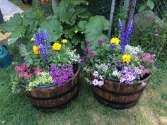 Flowers in half whiskey barrels from Home Depot