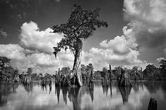 Paysage en noir et blanc Dead Lake par Clyde Butcher