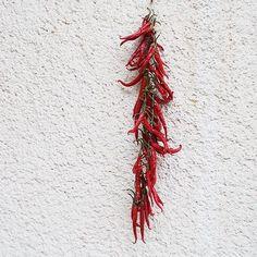 Nagyszüleim paprikája,csinosan lóg-Hungarian red pepper #chili #minimal #minimalism #minimalart #red #redpepper #food #vegetable #foodporn #instafood #village #white #nature #hungarian #simple #simplestyle #minimalistic #fresh #souvenir #pepper #foodinspo #villagestyle #villagelife #home #decor #magyar #paprika #countyside #foodinspiration #kitchen