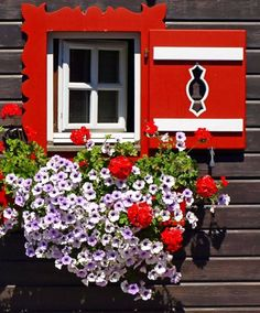 Types of Houseplant Bugs and Methods to Check Their Infestation Sankt Michael Im Lungau, Austria Teresa Restegui Garden Windows, Windows And Doors, Red Shutters, Through The Window, Window View, Window Boxes, Flower Boxes, Gates, Geraniums