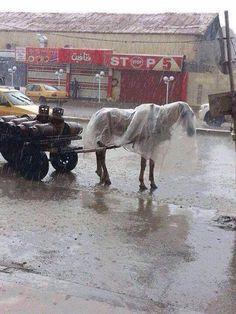 Horse in his rain coat