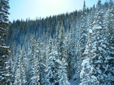 snow covered trees in colorado  #winter #snow #covered #trees #colorado #photography