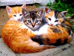 A bunch of kittens :)  #showmecats #thesocial #Kitty