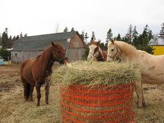 Round bale feeder home made Horse Shelter, Horse Stables, Horse Barns, Horse Slow Feeder, Hay Feeder For Horses, Hay Hut, Round Bale Feeder, Horse Hay, Goat Barn