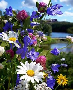 pictures - Flowers board - Make Money Flowers Nature, Exotic Flowers, Amazing Flowers, Wild Flowers, Beautiful Flowers, Beautiful Pictures, Flower Power, Flowers Wallpaper, Trees To Plant