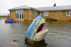 Andrew Parsons/I-Images/Zuma Press JAWS! A fake shark head bobbed in floodwaters in Wraysbury, England, Tuesday. British Prime Minister David Cameron insisted that money is no object in the battle against widespread flooding that has engulfed parts of England, but critics said enough hasn't been done.