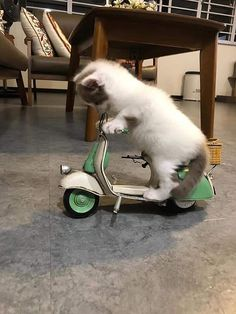 They see me rollin', they hatin'. Join our group: Happy Cats Animals And Pets, Baby Animals, Funny Animals, Cute Animals, Animals Images, Cute Kittens, Cats And Kittens, Chat Bizarre, Cancer In Cats
