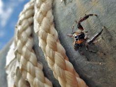 Foto Macro de araña en mi cuenta del National Geographic Spider looking at me Photo by Antonio Manuel Landa López -- National Geographic Your Shot