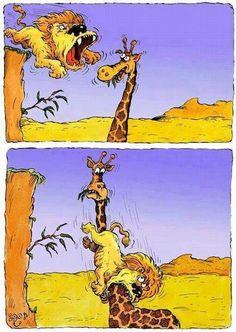 Funny animal cartoon - http://www.jokideo.com/