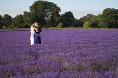 Lavender fields - Engagement photo