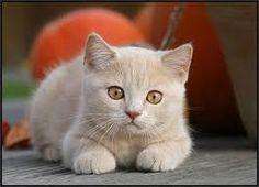 Resultado de imagen para imagenes de gatos tiernos