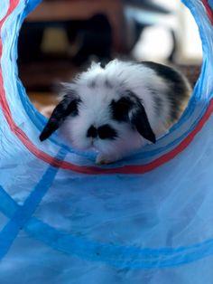 Bunny Care, House Rabbit, Cute Bunny, New Toys, Rabbits, Cute Animals, Pets, Lady, Pretty Animals