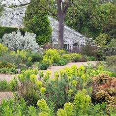 Dry Gardens In England (20 Of 21) | Dry Garden, Gravel Garden And Gardens
