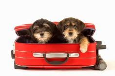 Moving tips for pet parents