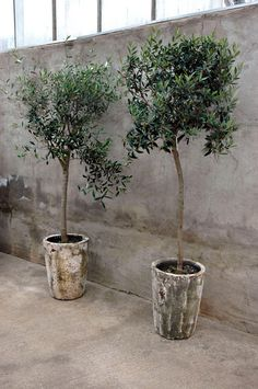 Potted trees. Lovely patina on the pots.