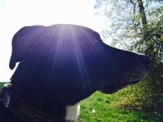 ganz schön hell heute ... #dog #outdoors #weather #sun #switzerland 21st, Horses, Instagram Posts, Animals, Nice Asses, Animaux, Animales, Horse, Animal