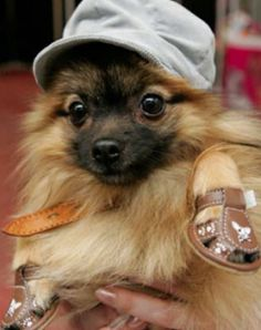 DOG FASHION  Visit www.lepawtique.co.za for more accessories and fun pet products.