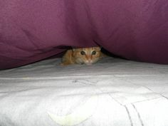 Sandy's favourite place - under the covers!!