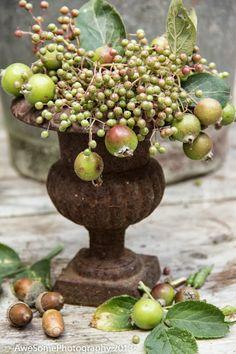 Fall decoration - fruit and berries in urn Autumn Decorating, Fall Decor, Holiday Decor, Deco Floral, Arte Floral, Garden Urns, Fall Arrangements, Fall Harvest, Harvest Farm