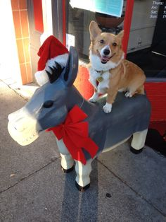 Chubby and his Christmas Donkey