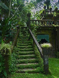 lifestyle The Secret Garden, Secret Gardens, Hidden Garden, Garden Stairs, House Stairs, Garden Bridge, Nature Aesthetic, Aesthetic Plants, Dream Garden