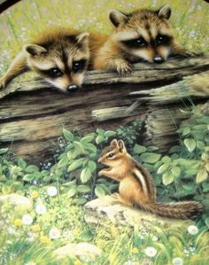 GREG GIORDANO Woodland Encounters Baby Raccoons & Chipmunk WANT TO PLAY? Plate