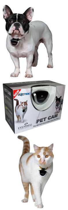 Digital Pet Cam - Neat idea ... find out what your pet is doing all day when your not around! This is cool! Love it!