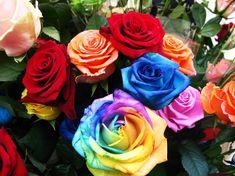 rosas - Buscar con Google