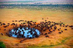 Ultimate Luxury Safari with All-Inclusive Dining & Intimate Game Drives, Africa Robinson Crusoe, Safari En Africa, Intimate Games, National Geographic Expeditions, Diani Beach, Adventure Travel Companies, Bronn, Wildlife Safari, Kenya