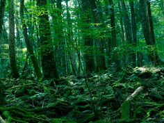 """Aokigahara Forest, Japan More people have committed suicide in Aokigahara Forest, also known as the """"Sea of Trees,"""" than anywhere else in Japan. One year the forest had more than 70 people hang themselves. Not a good place for a stroll."""