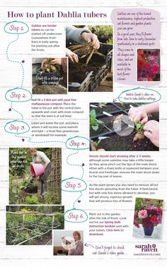 What To Search For Right Before You Purchase Your Higher Than Floor Pool Step-By-Step: How To Plant Dahlia Tubers Sarah Raven Cut Flower Garden, Flower Farm, Cut Garden, Flower Gardening, Paper Flowers Wedding, Diy Wedding Bouquet, Wedding Paper, Garden Seeds, Garden Plants
